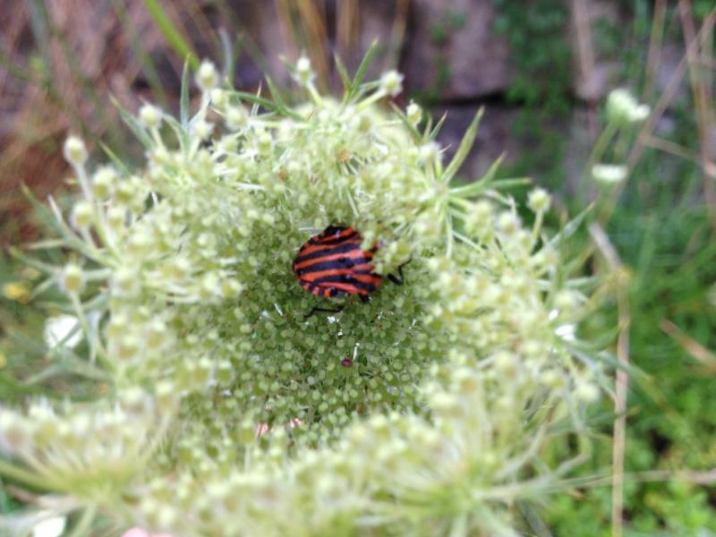 naturblau_naturbau_2017_07-12a_Biodiversität