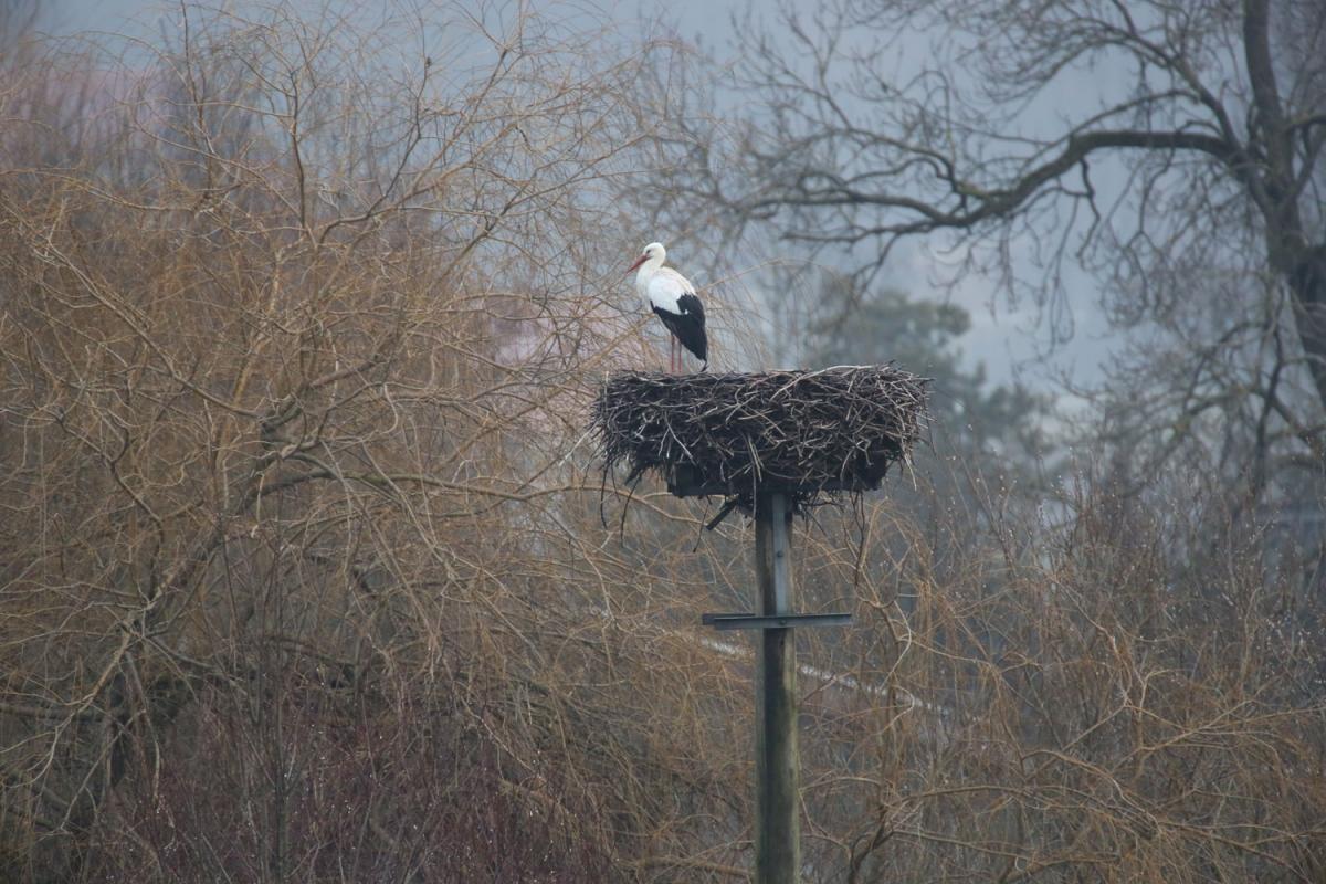 naturblau_naturbau_2018_01-18a_Storch