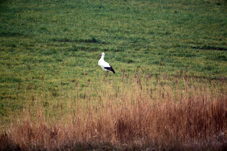 naturblau_naturbau_2018_01-18b_Storch
