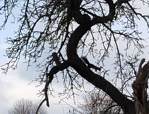 Eichhörnchentag