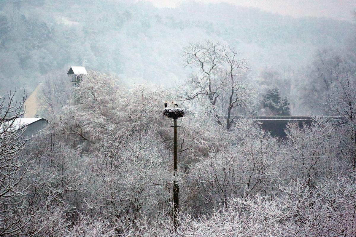naturblau_naturbau_2018_02-04a_Stoerche