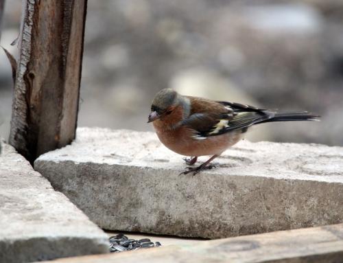 Sei gut zu Vögeln