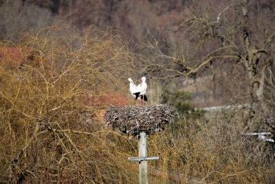 naturblau_naturbau_2018_03-05b_Stoerche