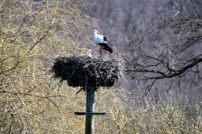 naturblau_naturbau_2018_04-01b_Stoerche