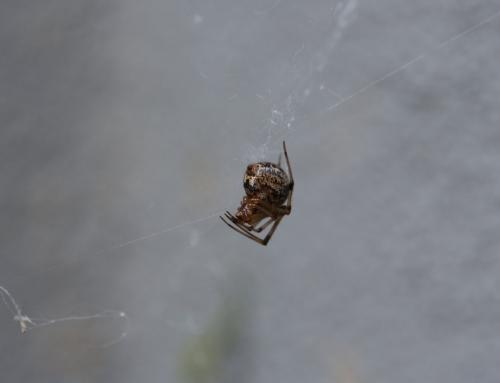 Spider (Wo)Man