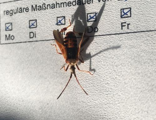 Insekt?